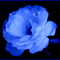Blue Perfection by Kathy Sampson