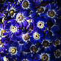 Blue Poem
