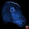 Blue Polled Dorset Sheep - 1643 F by James Ahn