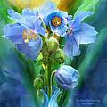 Blue Poppy Bouquet - Square by Carol Cavalaris