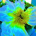 Blue Poppy Neon by Virginia Simmons