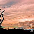 Blue Ridge Mountain Sunrise Panoramic  by Tom Gari Gallery-Three-Photography