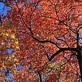 Blue Ridge Mountains Fall Foliage by Mountains to the Sea Photo