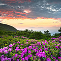 Blue Ridge Parkway Sunset - Craggy Gardens Rhododendron Bloom by Dave Allen