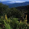 Blue Ridge Vista by Mountains to the Sea Photo