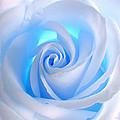 Blue Rose by Ben Lavitt
