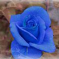 Blue Rose by Tammy Garner