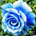 Blue Rose With Brushstrokes by Barbara Griffin