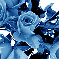 Blue Roses by Louise Grant