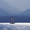 Blue Sailing  by Mark Smith