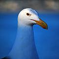 Blue Seagull by Debra Thompson