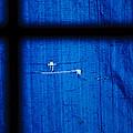 Blue Shade by Christi Kraft