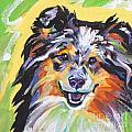 Blue Sheltie by Lea S