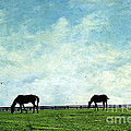 Blue Skies And Blue Grass by Darren Fisher