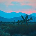 Blue Sky Cacti Sunset by Deprise Brescia