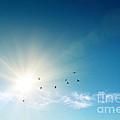 Blue Sky by Carlos Caetano