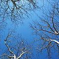 Blue Sky by Valerie Tull
