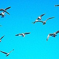 Blue Sky With Gulls by Steve Doris