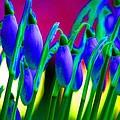 Blue Snowdrops by Carol Lynch