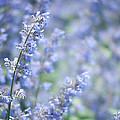 Blue Sonata by Zina Zinchik