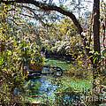 Blue Springs 1 by Nancy L Marshall
