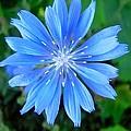 Blue Star by Stephanie Moore