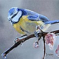 Blue Tit And Blossoms by Donna Tuten