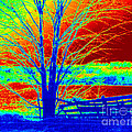 Blue Tree On Red And Green Background by Debbie Wassmann