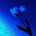 Blue Tulip by Christine Sponchia