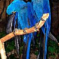 Blue Velvet by Bertie Edwards