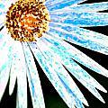 Blue Vexel Flower by Bruce Nutting