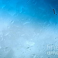 Blue Water Droplets by Jacqueline Athmann