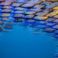Blue Water by Martin Joyful