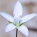 Blue Wild Flower by Eric Noa