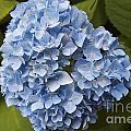 Blue by William Norton