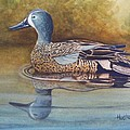 Blue Winged Teal by Rick Huotari