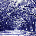 Blue World In Savannah by Carol Groenen