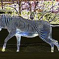 Blue Zebra by Les Palenik