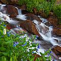 Bluebell Creek by Darren  White