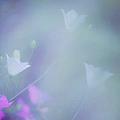 Bluebell Fantasy by Jenny Rainbow