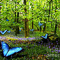 Bluebell Wood by Russ Murry