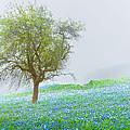 Bluebells by Debra and Dave Vanderlaan