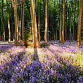 Bluebells In Shadows by Simon Bratt Photography LRPS
