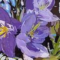 Bluebells by Tammy Watt