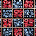 Blueberries And Raspberries  by Tim Gainey