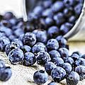 Blueberries by Elena Elisseeva