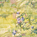 Blueberries Painted On The Wall by Alanna DPhoto