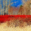 Blueberry Bushes In Winter by Karen Molenaar Terrell
