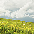 Blueberry Field And Goldenrod With Dramatic Sky In Maine by Keith Webber Jr