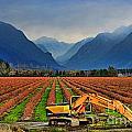 Blueberry Field Excavator by Randy Harris
